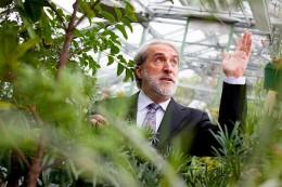 Daniel Noceras künstliches Blatt ist besser als die Photosynthese.