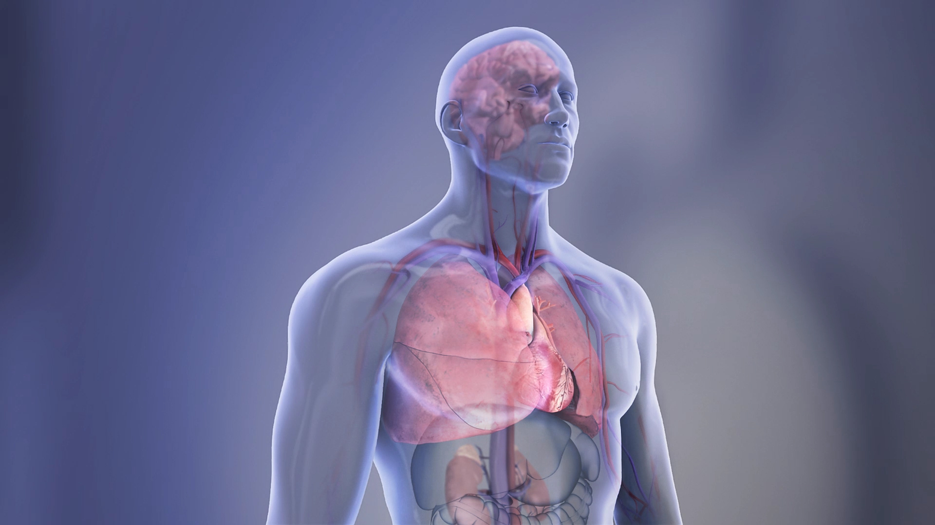 Picture shows Organs in a transparent body illustration.