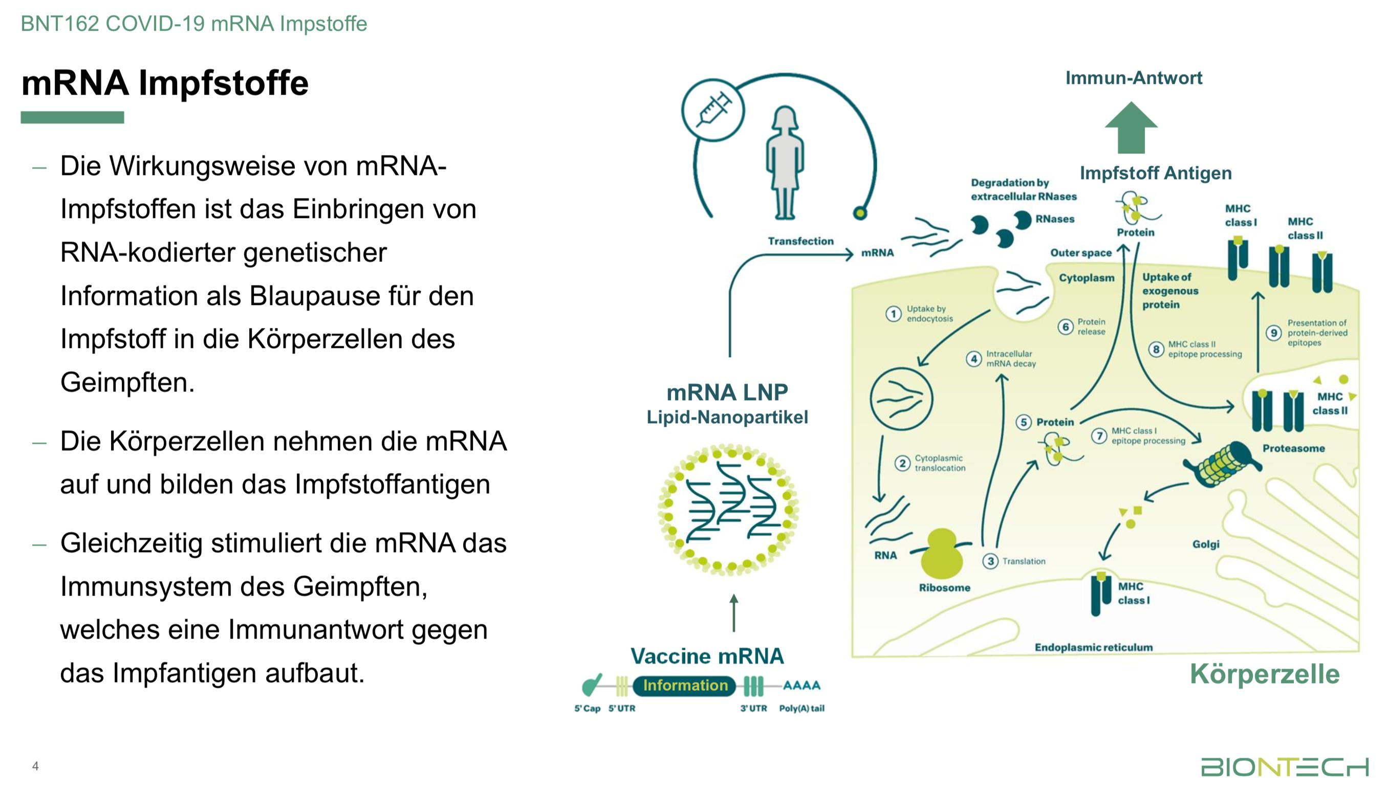 RNA-Impfstoffe greifen im Gegensatz zu Antigen-basierten Impfstoffen tiefgreifend in den Zellstoffwechsel ein. Ob sich daraus Langzeitschäden ergeben, ist unklar. Quelle: PP-Präsentation BioNTech.