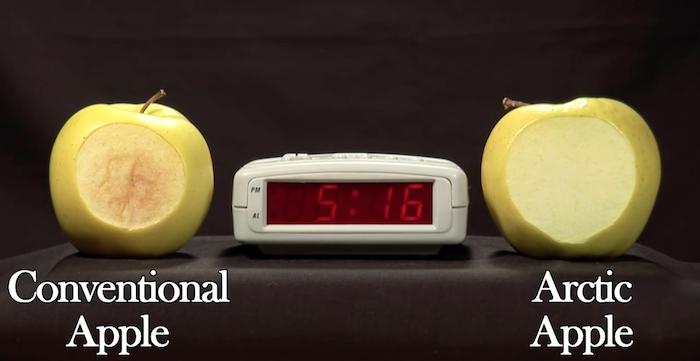 Beim Arctic Apple wurde das Gen für die enzymatische Bräunung abgeschaltet, so dass das Fruchtfleisch nicht mehr braun wird.