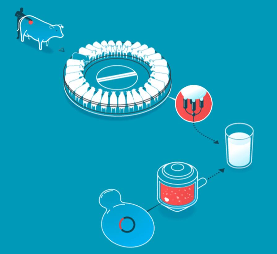 Unterschied zwischen konventioneller Milchproduktion und Muufri-Herstellung.